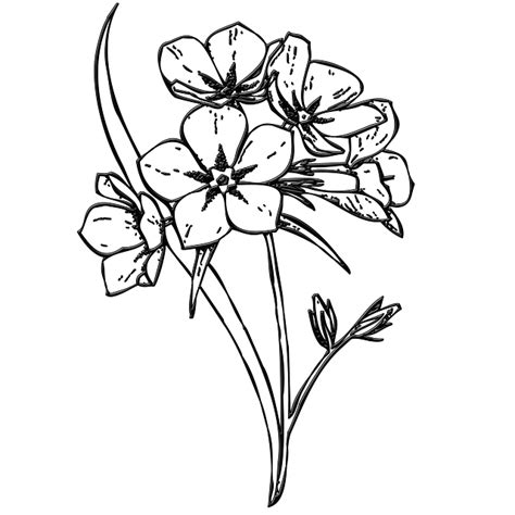 free illustration flowers bunch buds floral free