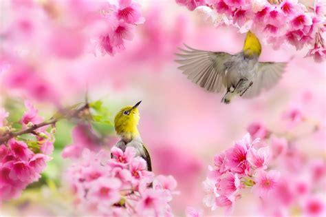 spring wallpaper for mac computer free spring desktop wallpaper for mac impremedia net
