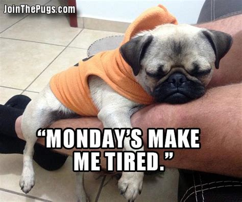 monday pug join the pugs gt monday blues