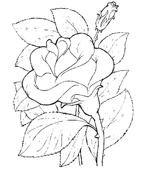 coloring pages flower rose free rose flower coloring pages
