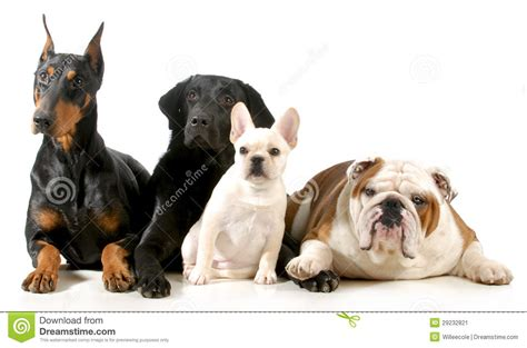 four dogs four dogs stock image image 29232821