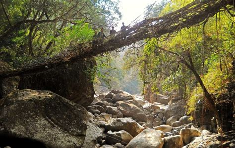 living bridges meghalaya s living root bridges a unesco heritage