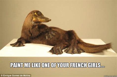 Platypus Meme - french platypus memes quickmeme