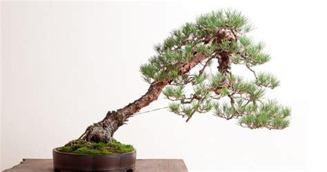 jenis tanaman hias bonsai terbaik  indonesia