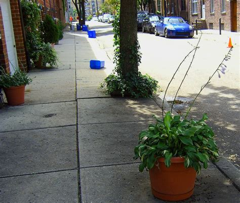 sidewalk planters and recycling bins s photo album