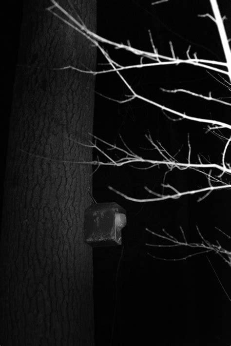 Englischer Garten München Bei Nacht by Florian Bachmann Nachtung