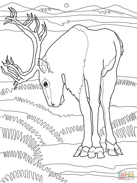 Caribou Deer Coloring Online  Super sketch template