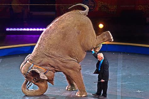 Circus Elephant Rage No More Elephants At The Circus Nyclass Org