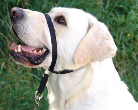 gentle dogs gentle leader headcollar tripswithpets