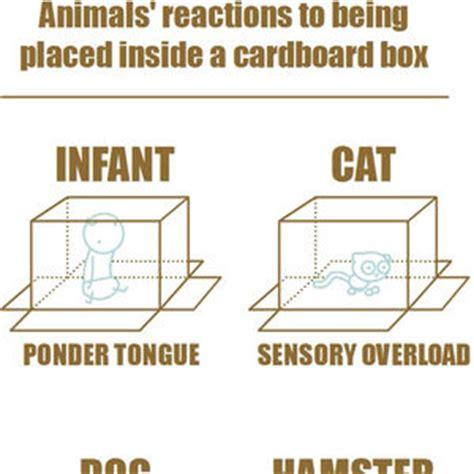 Cardboard Box Meme - meme center memegusta101 profile