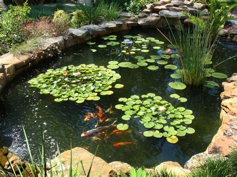 fish for backyard pond photos hgtv