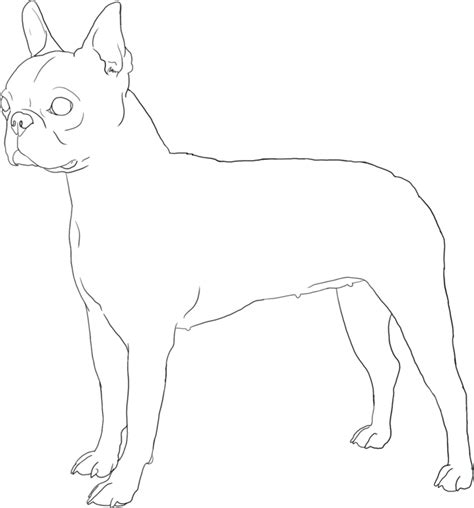 boston terrier coloring page boston terrier coloring pages printable coloring home