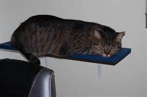 wall shelves for cats cat shelves diy sensiblysara