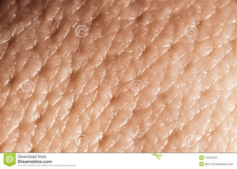 human skin macro picture stock photo 169 jugulator 25119063 human skin macro stock photos image 14341663