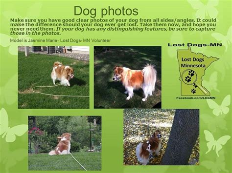 lost dogs mn 17 best images about lost pet detective on cats lost and cat finder