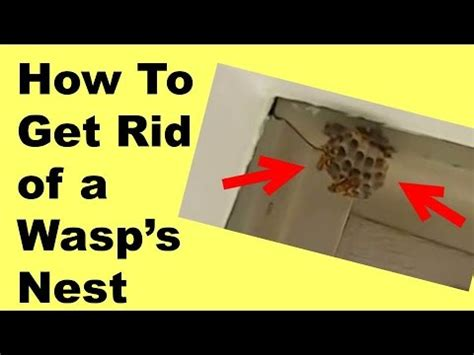 how to get rid of wasps with doovi