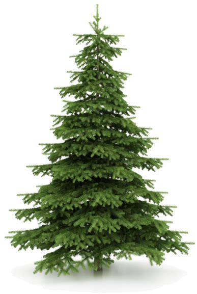 xmas tree images do you have a christmas tree that needs to be picked up