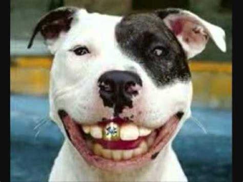imagenes graciosos de niños los animales mas graciosos youtube