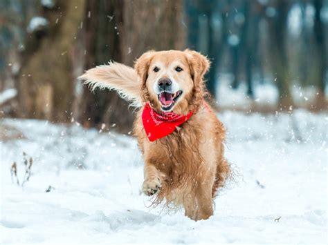 ways    dog active  winter petmd