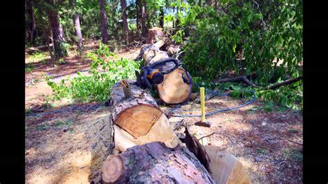 log planter box log planters from dead tree