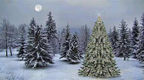 christmas tree in winter forest full hd wallpaper and