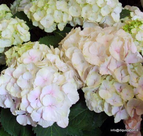 fiori di settembre per matrimonio help fiori ci sono a settembre prima delle