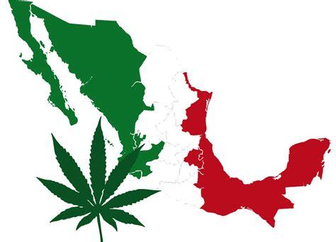 imagenes de marihuana chidas de drogas fotos marihuana holidays oo