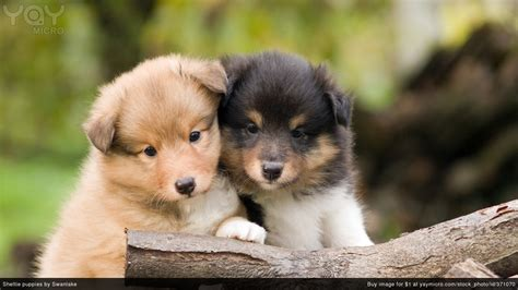 two puppies yaymicro free wallpapers for desktop background and wallpapers for mac and pc