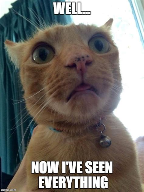 Shocked Cat Meme - memes shocked face image memes at relatably com
