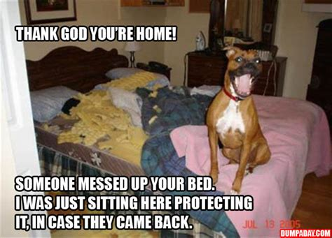 hey thank god you re home someone messed up your bed i