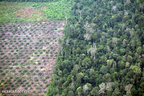 Canopy Definition Rainforest Plantation Companies Agree To Process To Define Zero