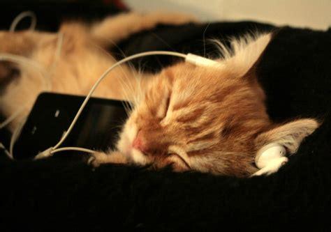 cat song science bibliolore