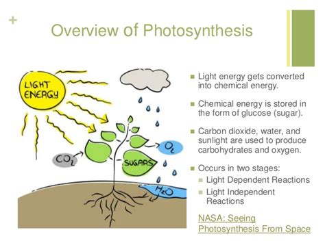 how is light energy converted into chemical energy during photosynthesis photosynthesis lecture for lesson 1
