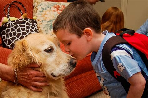 how to your for pet therapy pet therapy ronald mcdonald house of winston salem