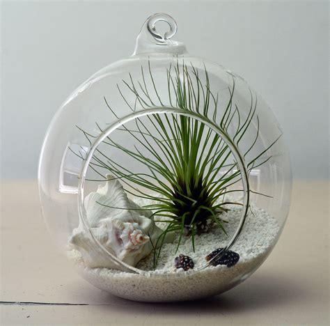How To Make Decorative Balls Air Plant Terrarium Small Tillandsia Fillifolia Living