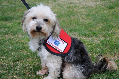 small service dogs small service vest official vest for small dogs