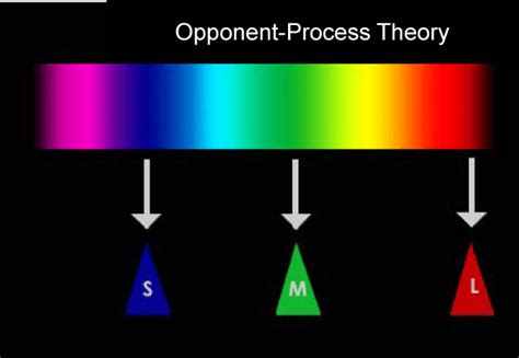 according to the trichromatic theory of color vision a review of color science in dentistry the process of