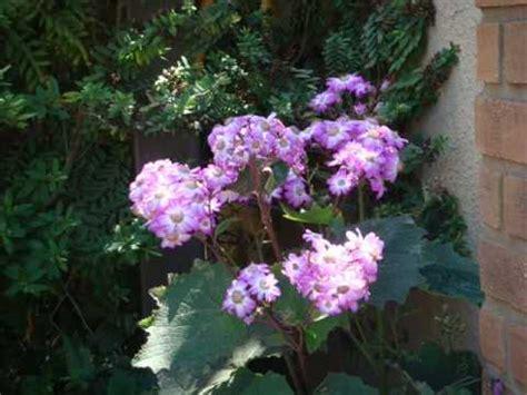 quel mazzolin di fiori testo le mondine quel mazzolin di fiori ufficiale doovi