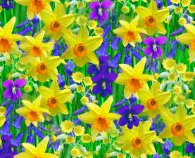 image of spring flowers pics photos spring flowers wallpaper free spring flowers