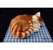 Cat Cake  Scrumptons