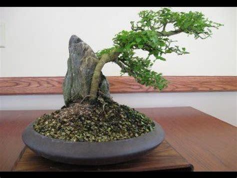 bonsai secrets designing growing bonsai style the secrets of shaping youtube