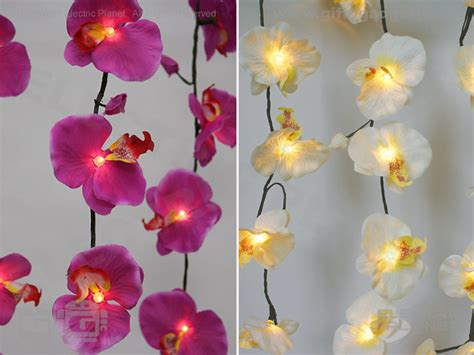 led grow lights for orchids orchid lighting lighting ideas