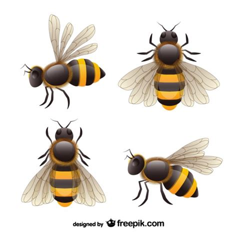 Bees Set by Realistic Bees Set Vector Free