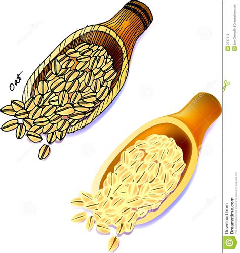 picture illustration oats royalty free stock photo image 3717915