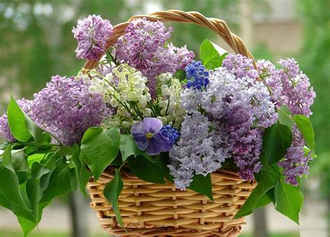 purple lilacs purple lilac flowers home decor flower arrangements