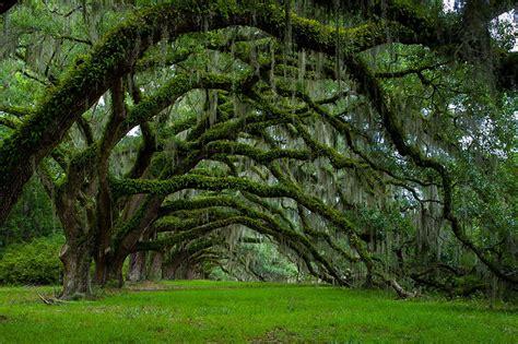 amazing trees dusky s wonders
