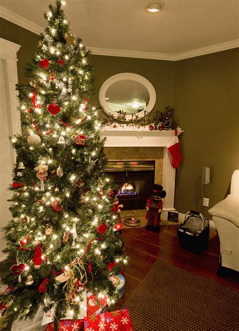 do real christmas trees have bugs beware your tree could contain thousands of bugs
