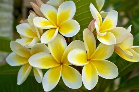 top  flowering plants  subtropical gardens