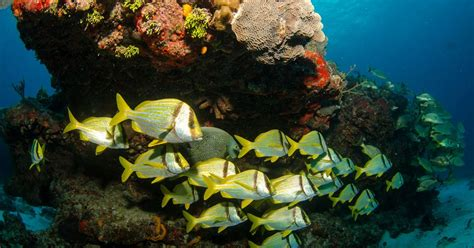 mesoamerican barrier reef system located