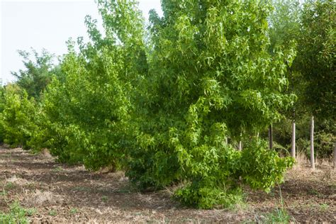 tipi di palma da giardino piante esotiche da giardino come coltivare alberi esotici